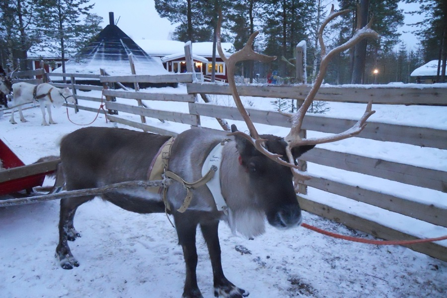 Finlandia Rovaniemi Renos