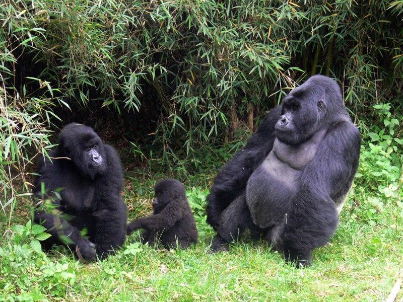 Gorilla 1 viajes a medida y viajes de novios