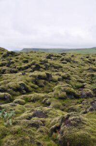 Dia 4. Segunda visita Campos de lava