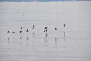 Dia 6. pueblo pescador de Akranes